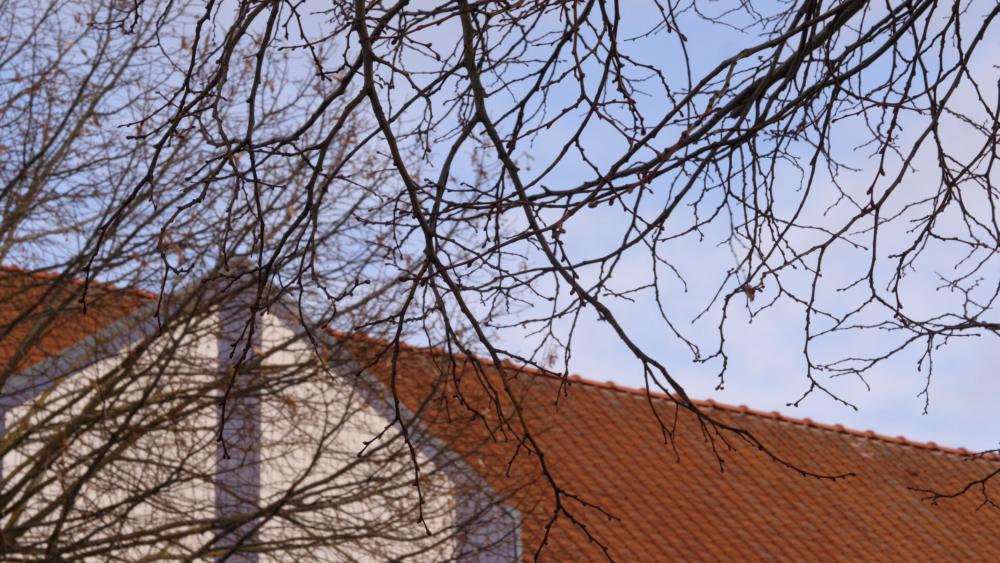 toit-école-arbre